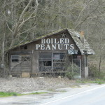 Boiled Peanuts in Georgia