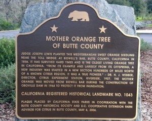 Mother Orange Tree Sign