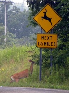Deer Crossing Sign in upstate New York