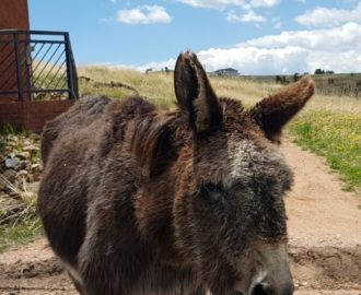 Cripple Creek Colorado Donkey